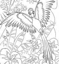 раскраска попугай распечатать бесплатно
